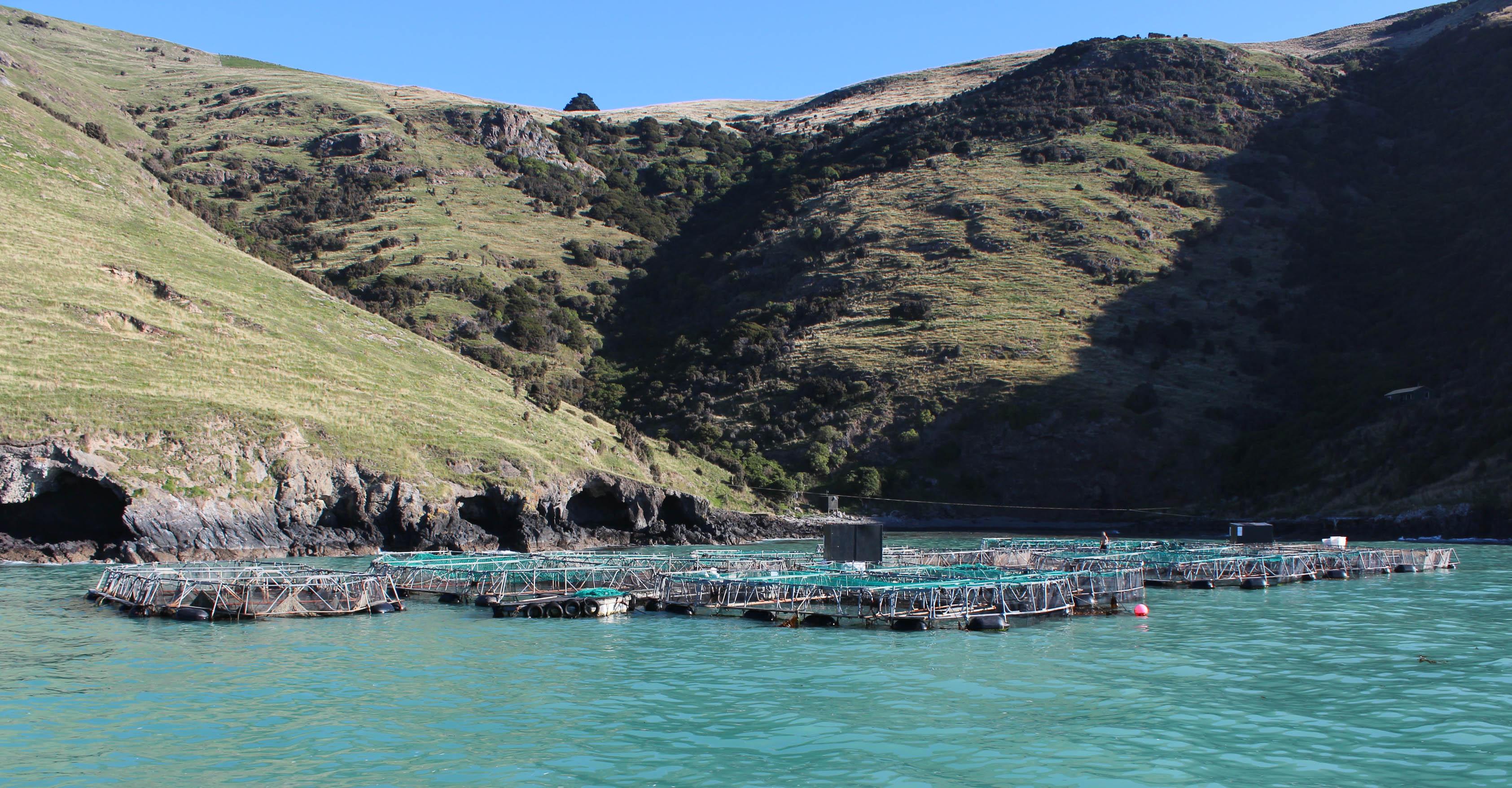 Nouvelle Zélande - Arthur's pass & Akaroa - les lubies de louise (32 sur 46)