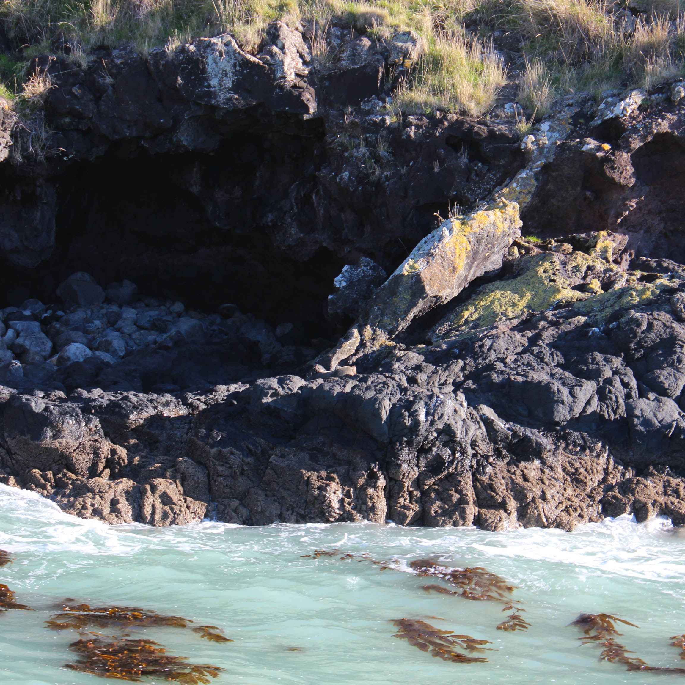 Nouvelle Zélande - Arthur's pass & Akaroa - les lubies de louise (34 sur 46)