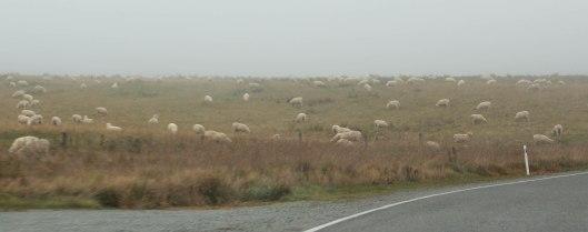 Nouvelle Zélande - Christchurch & twizel - les lubies de louise (4 sur 49)