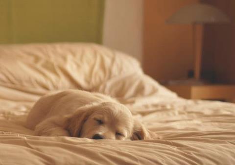 adorable-cute-dog-Favim.com-626566